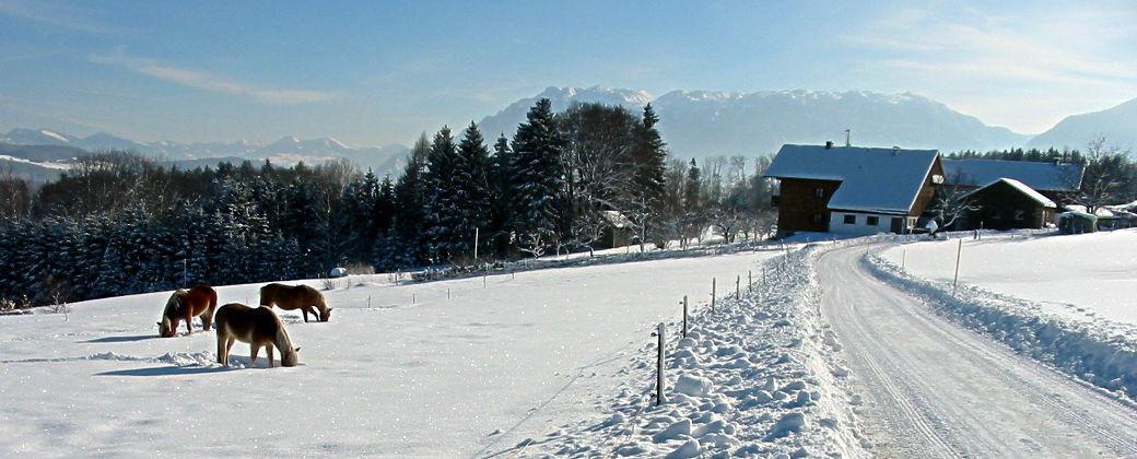 Zufahrt zu unserem Haus im Winter